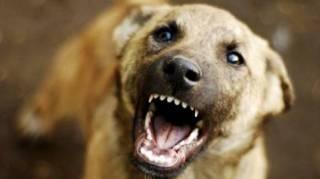 В Запорожье бойцовский пес набросился на своего хозяина