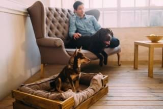 Не хуже, чем у хозяина: выбираем спальное место для собаки