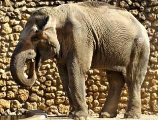 В Испании умерла слониха, 43 года прожившая в одиночестве