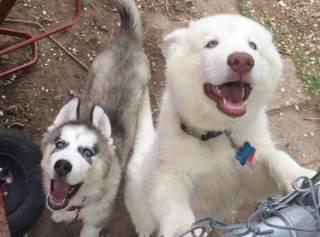 В США «очень милая собака» откусила руку ребенку