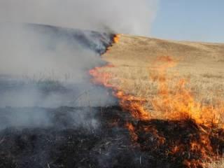 На Киевщине полыхает сухая трава: огонь подбирается к жилым домам