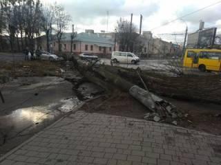Львов «накрыло» мощным ураганом. Появились фото последствий стихии