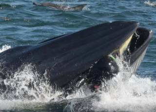 В Африке кит проглотил фотографа, но счастливчику невероятным образом удалось спастись