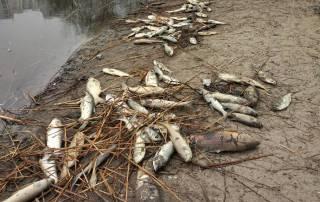 На Русановском озере в Киеве произошла экологическая катастрофа