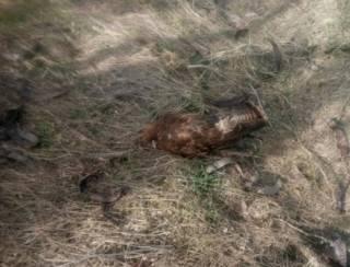 В Запорожской области массово гибнут птицы и животные