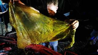 Содержимое желудка выброшенного на берег кита шокировало биологов