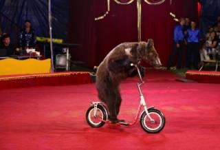 В Киеве запретили цирковые представления с использованием животных