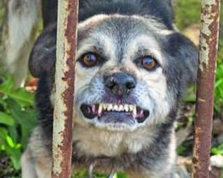 В Николаеве бешеная собака отправила на больничную койку дюжину человек