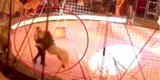 В оккупированном Луганске лев едва не разорвал дрессировщика из Египта