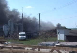 В селе Львовской области заживо сгорели сотни свиней