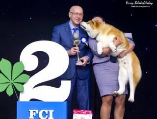 В день выборов президента в Киеве впервые выберут топ-собаку года