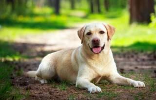 Ученые рассказали об удивительной пользе от собак