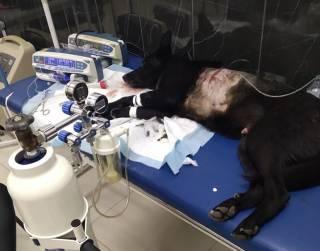 В Запорожье мужчина расстрелял собаку на глазах у детей, которые гуляли на площадке