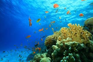 Ученые обнаружили в морских пучинах новую форму жизни