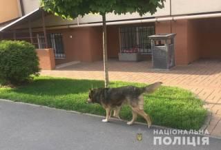 Под Киевом собака серьезно покусала маленькую девочку