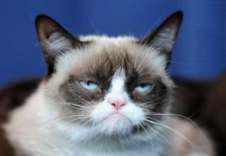 Умерла самая известная кошка в мире