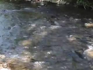 На Закарпатье школьника смыло в реку и унесло течением
