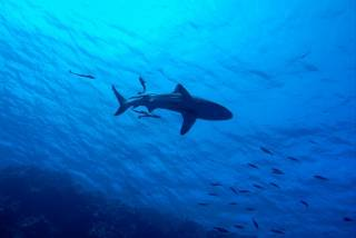 На Гавайях акула загрызла туриста