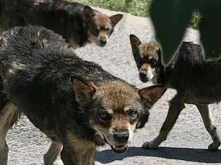 Под Москвой стая бродячих собак сильно покусала двух малышей