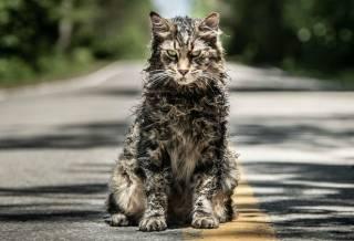 Кот из «Кладбища домашних животных» умер буквально сразу же после премьеры фильма