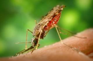 Ученые придумали неожиданное средство от малярийных комаров