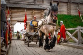 Под Киевом пройдет шоу-выставка лошадей уникальных исторических пород