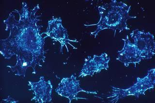 Французские ученые считают, что половое размножение появилось для борьбы с раком