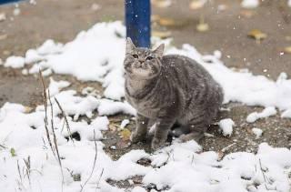 Под Житомиром внезапно выпал снег