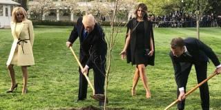 В процессе карантина в Вашингтоне умерло «дерево дружбы» между США и Францией, – СМИ