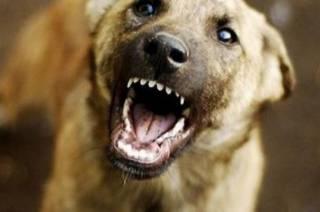 На Харьковщине пес набросился на маленькую девочку