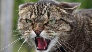 В курортной Затоке вводят карантин из-за бешеной кошки
