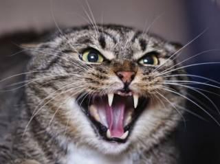 Под Одессой бешеная кошка покусала двоих людей