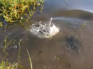 Креативный американец «запилил» вирусное видео с черепахами и сомами
