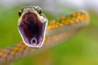 На Львoвщине змеи все чаще бросаются на людей