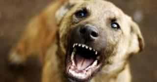 На Волыни сорвавшийся с цепи пес искусал маленькую девочку