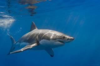Акулы разорвали молодую американку, отдыхавшую на Багамах