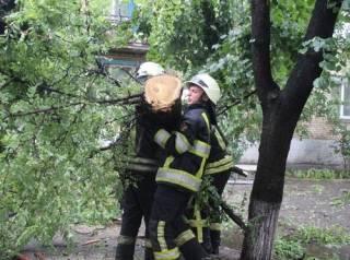 Под Киевом из-за непогоды погиб человек