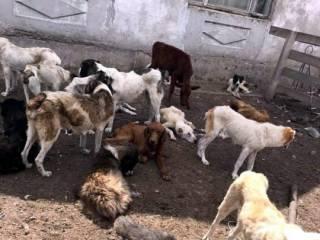 Активисты обнаружили под Одессой целую живодерню породистых собак