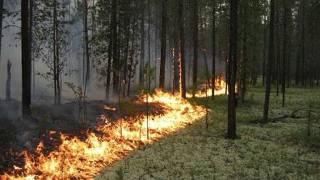 На Луганщине горит заминированный лес. Есть пострадавший