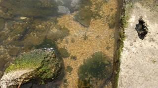 На известном одесском курорте зафиксирован массовый мор рыбы и креветок