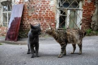 Во Львове утверждают, что впервые в мире подсчитали количество уличных котов