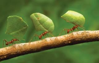 Ученые поведали о пользе употребления в пищу… кузнечиков и муравьев