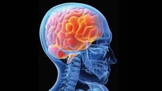Ученые рассказали, как «омолодить» мозг в старости