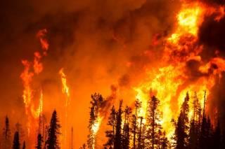 Чукотку охватили гигантские лесные пожары