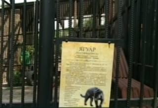 Из зоопарка одного из городов России сбежал… ягуар