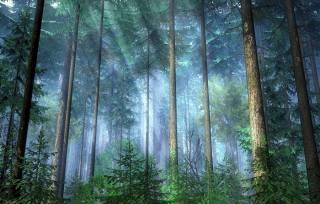 В лесу на Закарпатье ребенка убило током