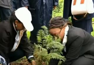 Сотни миллионов деревьев за полдня: в Эфиопии установили уникальный рекорд