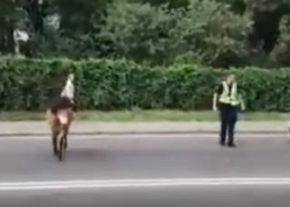 Появилось видео, как в Киеве полицейский гонялся… за пони