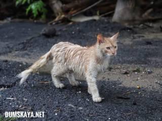 В Одессу пришла «Большая вода»: фото и видео последствий стихии