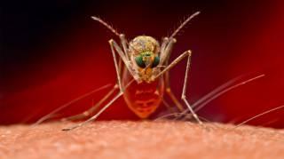 Ученые рассказали, кого комары кусают в первую очередь